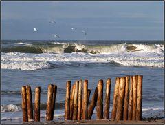 | beach barrier |