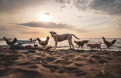 Beach Invaders ~ Coronasia 2020