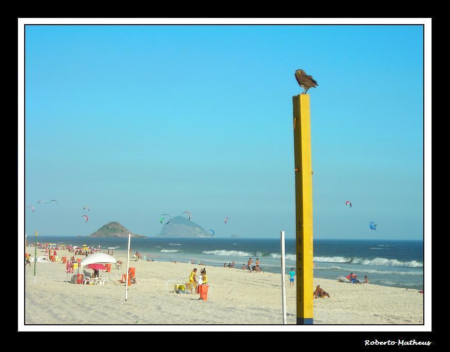 """""""Beach Owl"""" / Series: Life in Rio."""