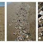 Beach Shells Triptych