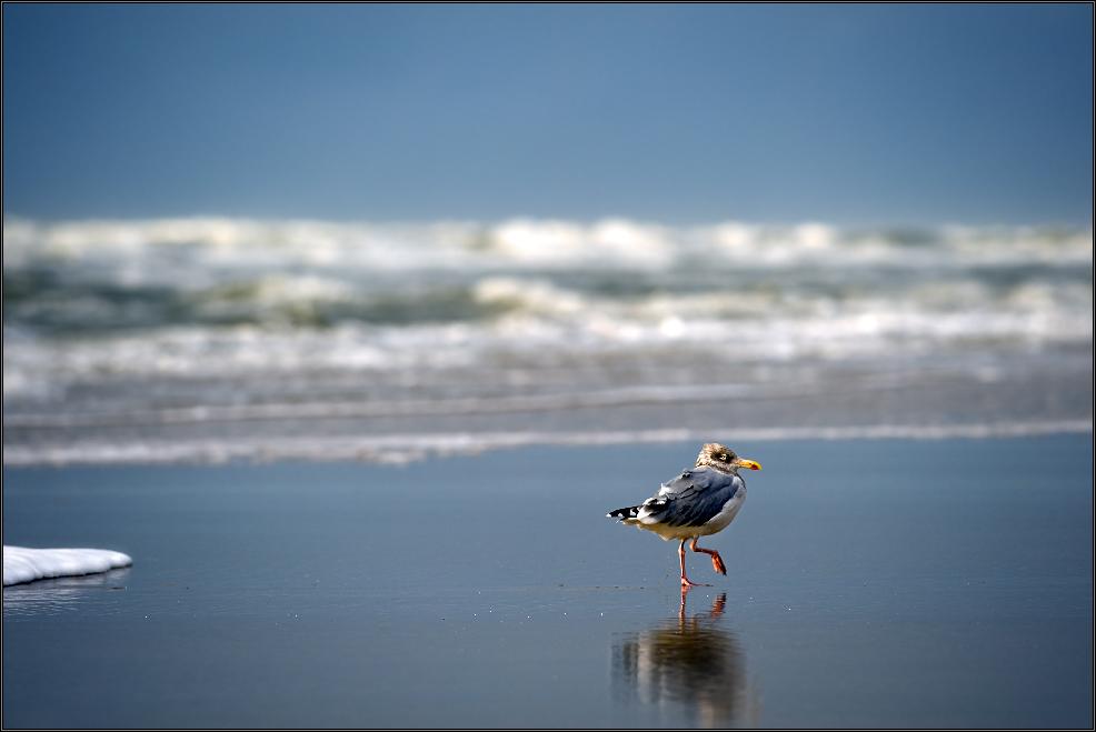 *beach-walk*