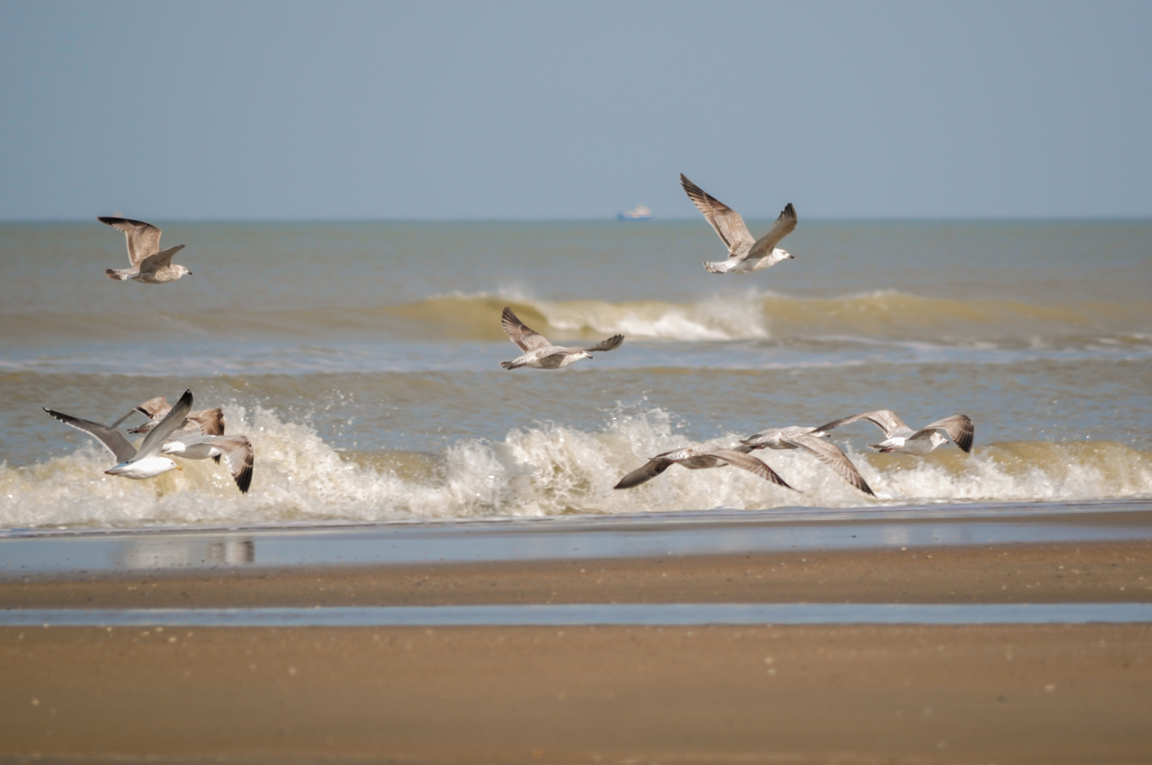>>Beachlife III