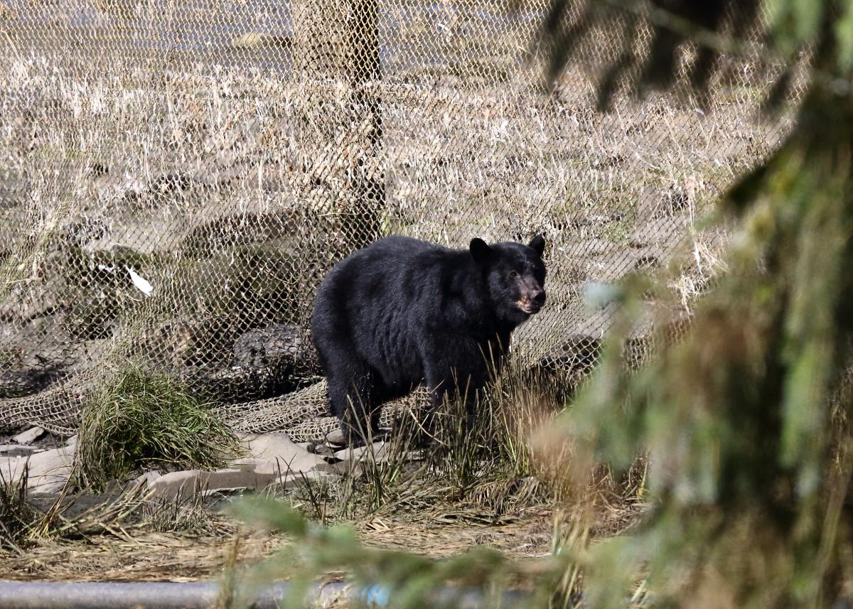 Bear somewhere in Alaska
