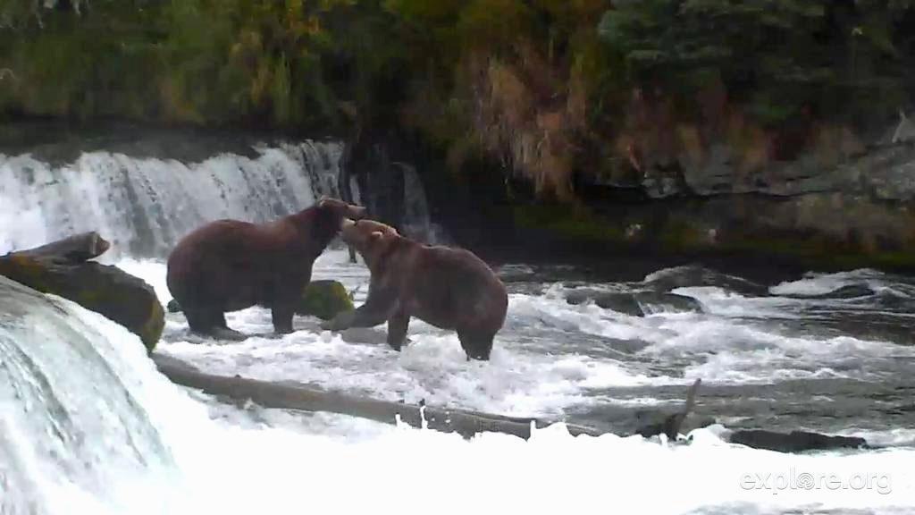 Bear Whisper