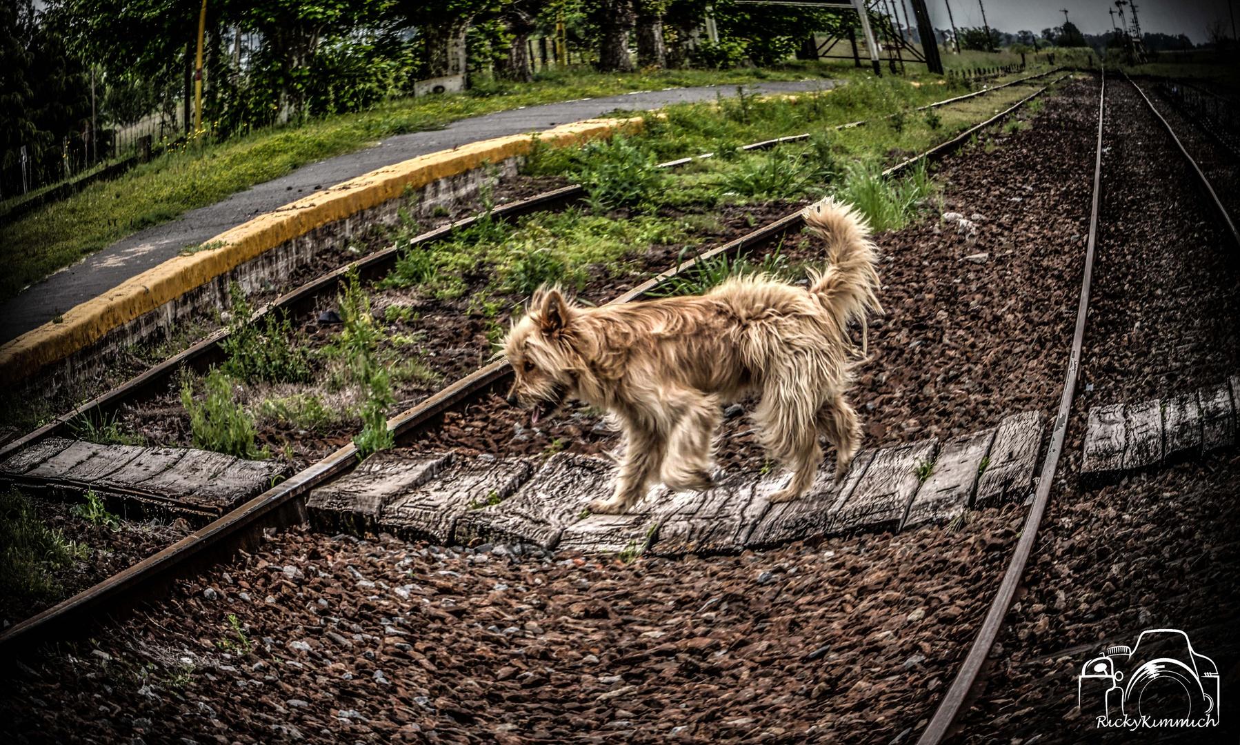 Beatles Ferroviario ( Beatles-Eisenbahn )