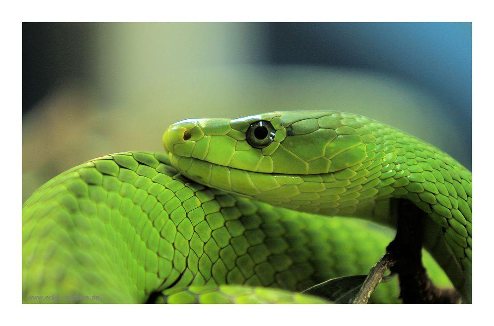 beau vert