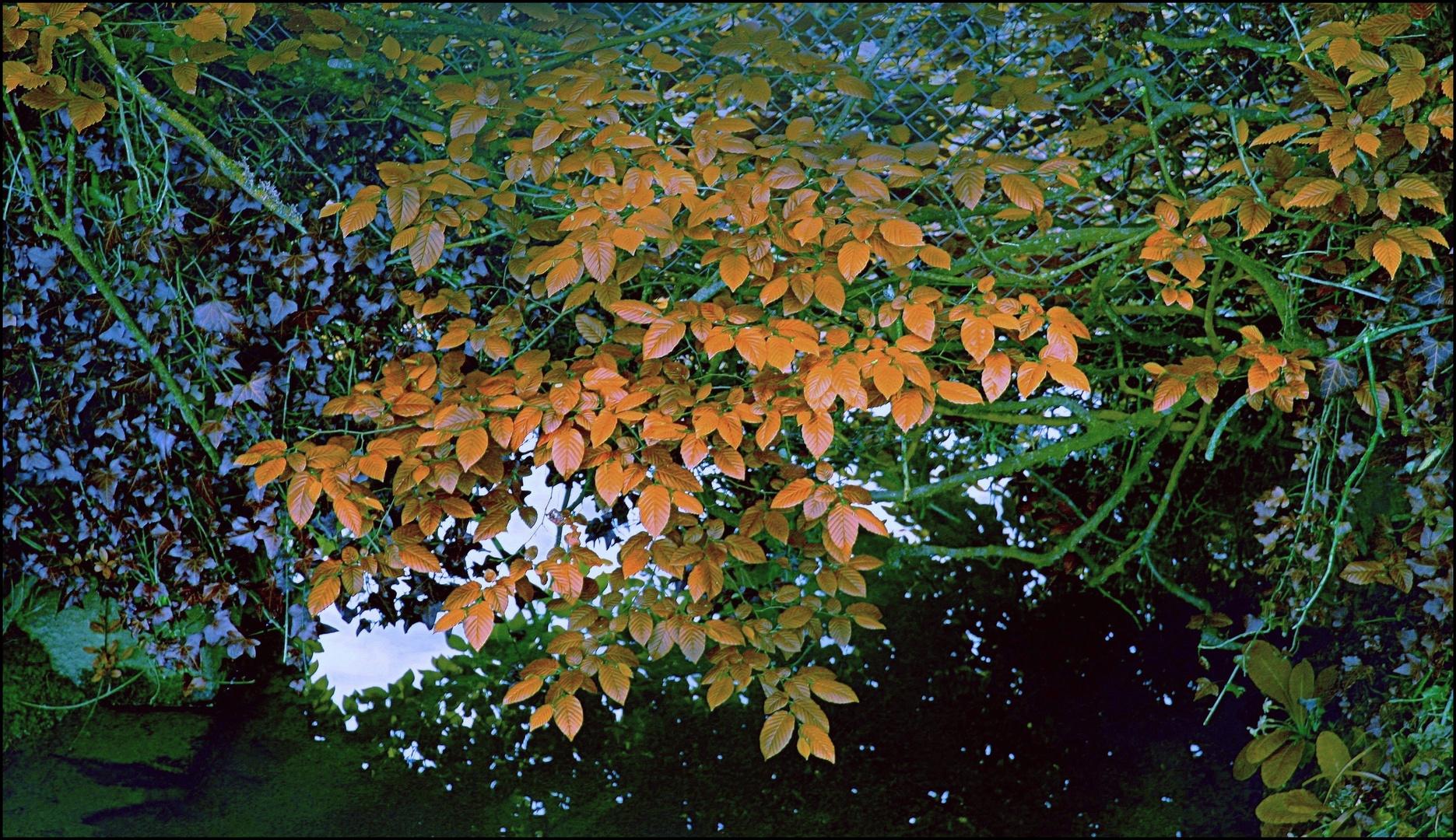 Beauté d'automne