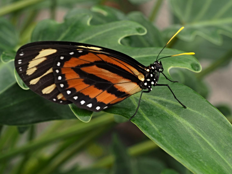 Beauté des ailes 14