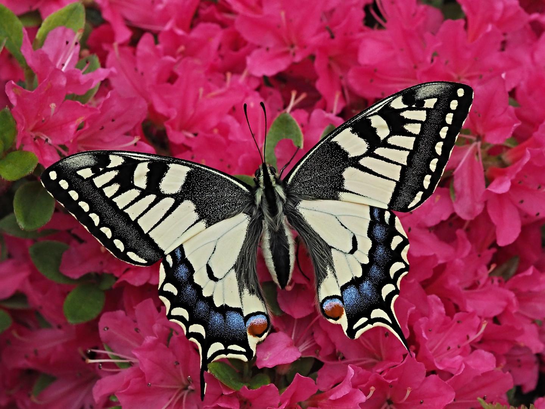 Beauté des ailes 29