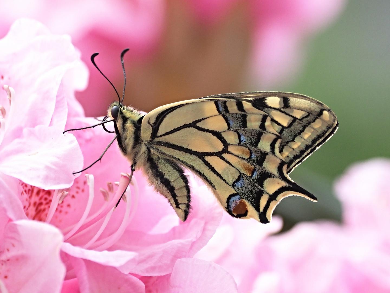 Beauté des ailes 31