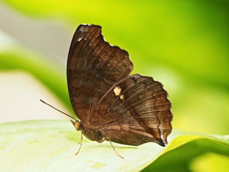 Beauté des ailes 5