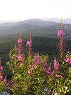 Beautiful British Columbia, Jarvis.