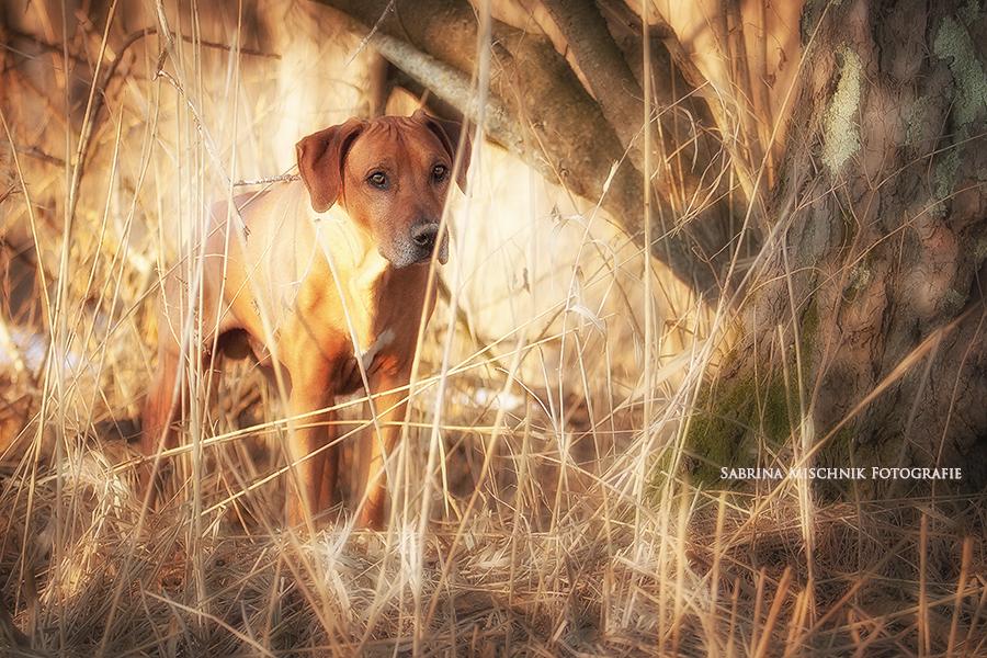 Beautiful Dog!