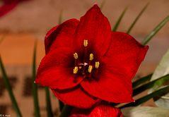 Beautiful Flowers  (15)