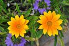 Beautiful Flowers 2