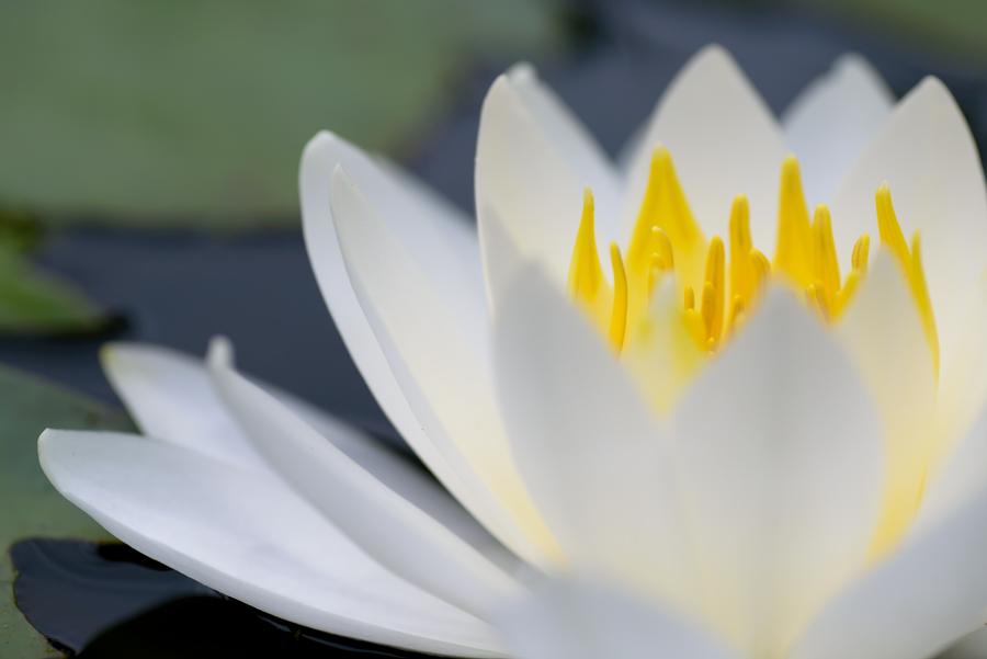 Beautiful white, Beautiful yellow