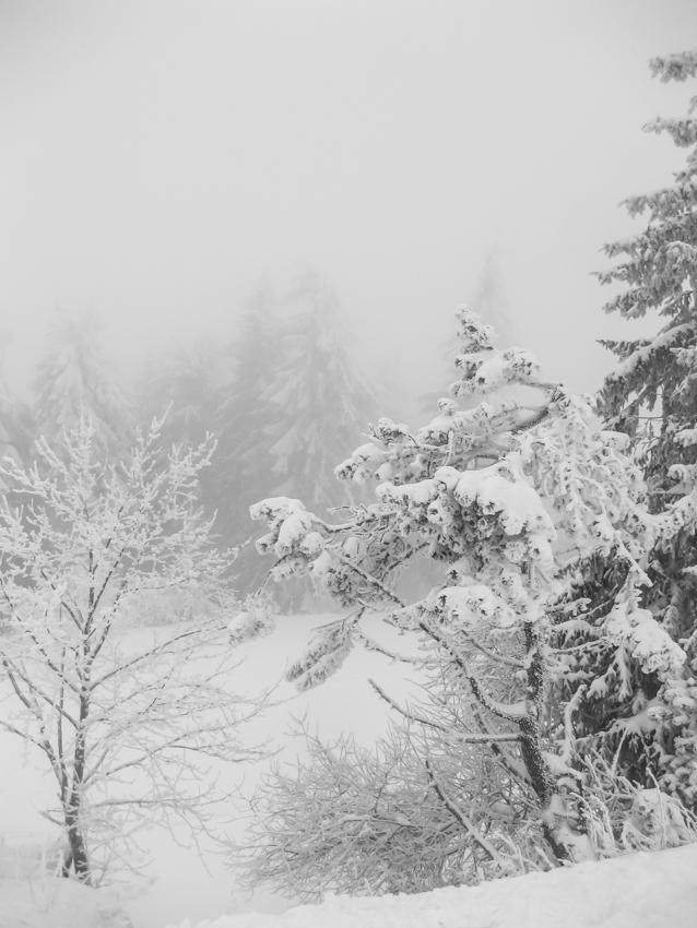 beautiful winter #2