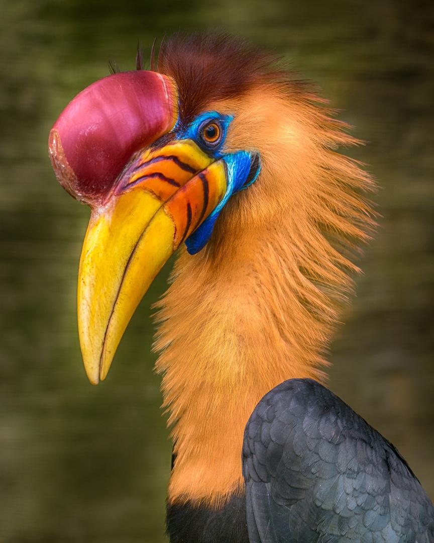 Beauty Bird