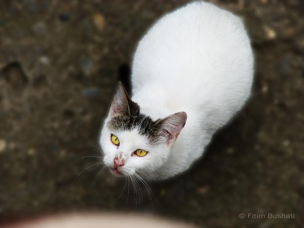 Beauty cat