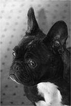 beauty doggy