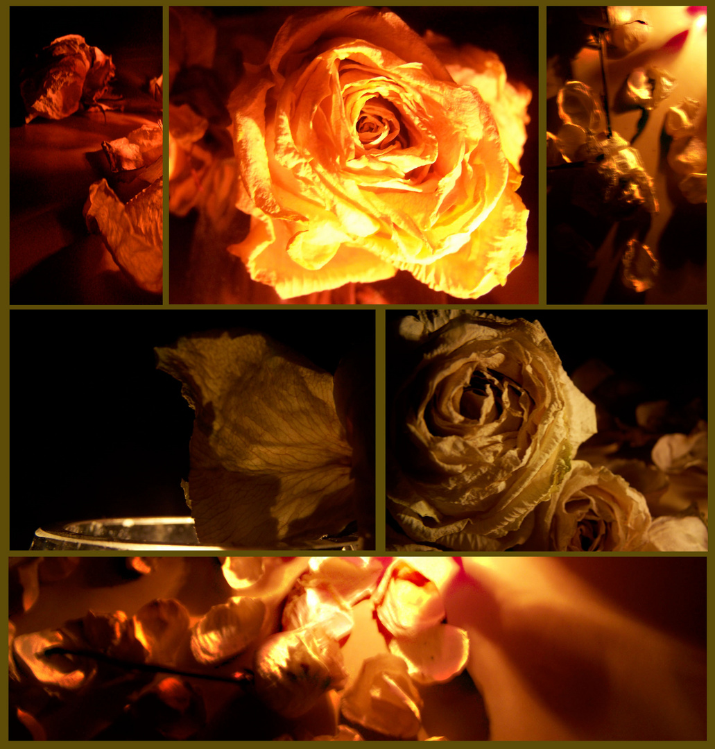 beauty from a rose 1