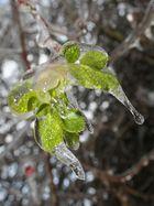 beauty in ice