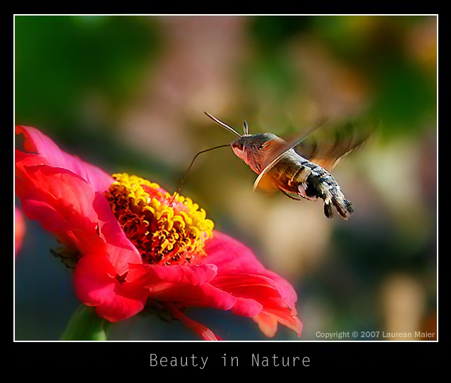 Beauty in Nature