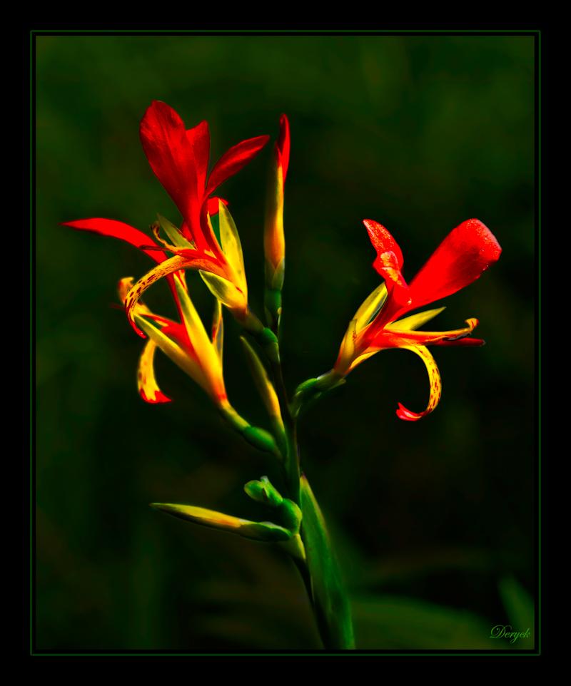 Beauty is.....