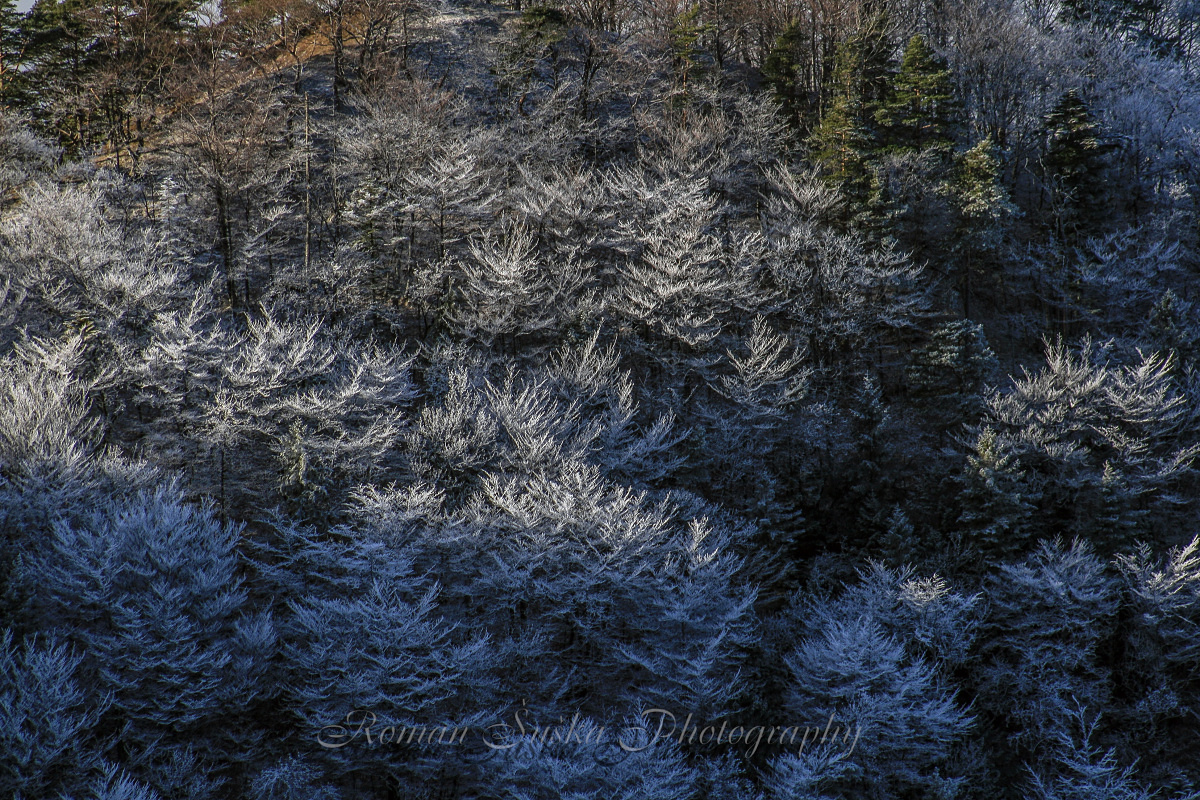 Beauty of winter -SK