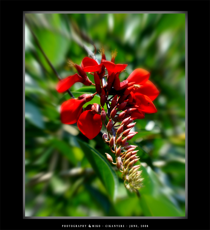 .:: Beauty RED ::.