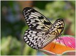 * beautyful butterfly *
