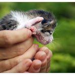 """""""bébé-  chat (5 jours)"""""""