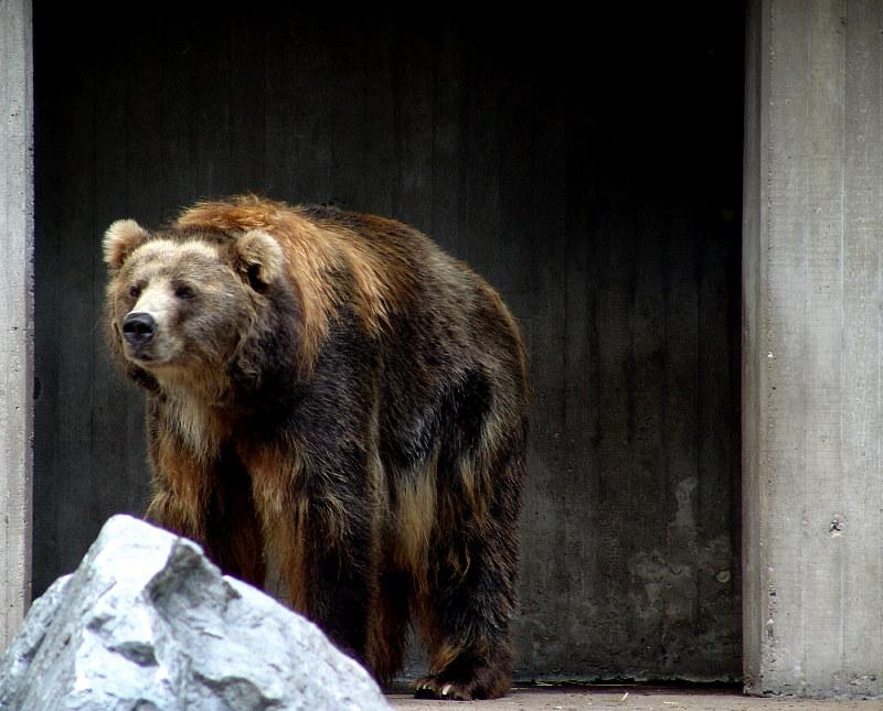Beddong-Bär