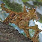 Bedrohliches wildes Tier im tiefen Wald! - Un animal dangereux dans la forêt sauvage.