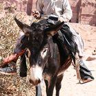 Beduinenjunge und sein Esel in Petra (Jordanien)
