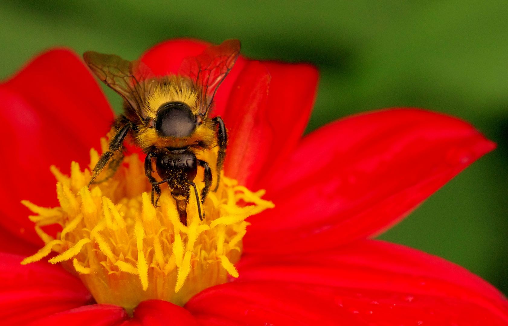 Bee and the flower !