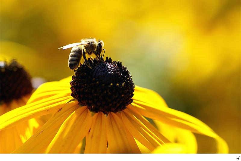 Bee Bee...