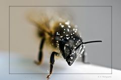 Bee Gee