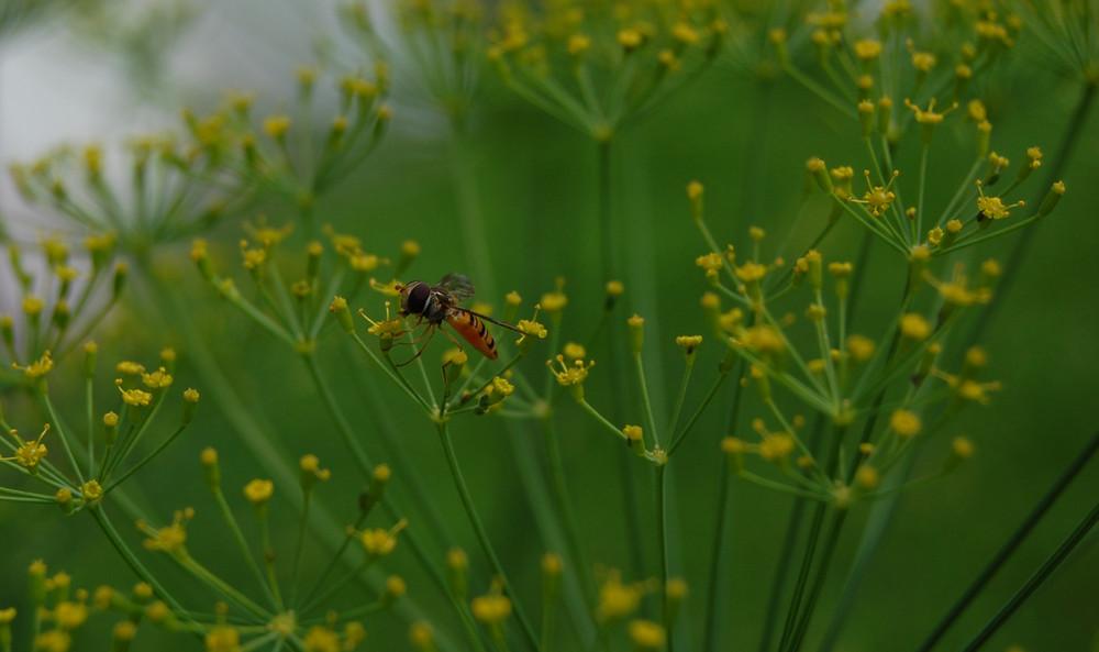 bee (movie) / Schwebefliege