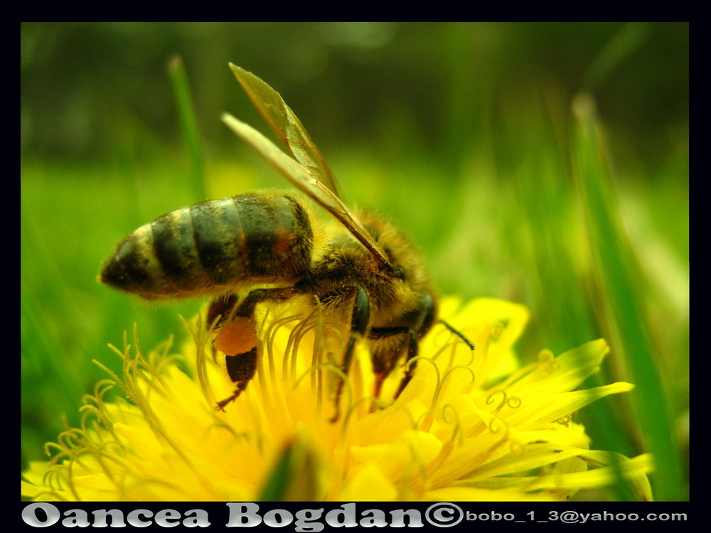 bee to work