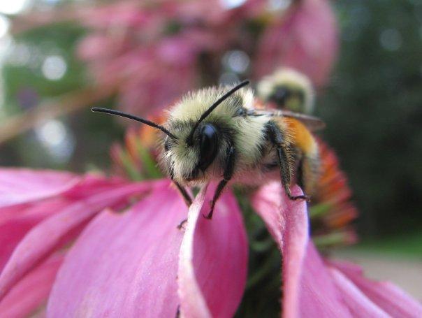 Bee very watchful