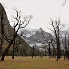 Beeindruckende Berg-und Baumwelt!