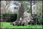 Beeindruckendes Stammgebilde - Botanischer Garten Bonn