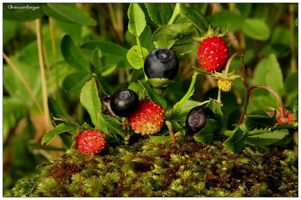Pflanzen Des Waldes