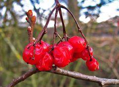 Beeren im Dezember