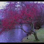 Beerenbaum im Spätherbst