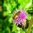 Bees,wasps
