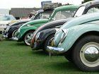beetle line up