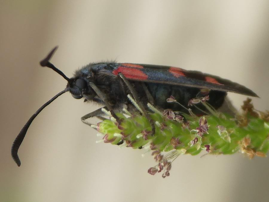 Beetle's look