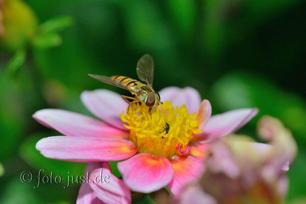 Begegnung auf einer Blüte